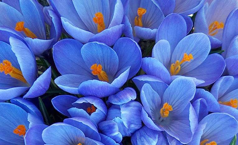 картинки цвета голубого